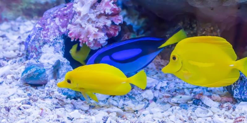 The Goldfish Bowl website design